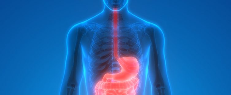 3d X-ray of the gut image